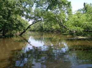 Swamp Waterway