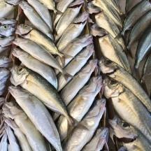 Fish.3