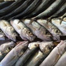 Fish.4