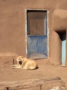 Taos Dog