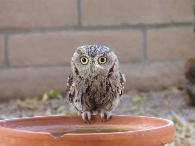Ann's Owl